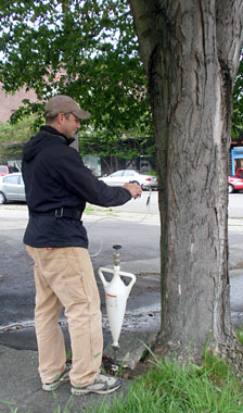 Arborist injecting a tree with systemic insecticide